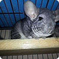 Adopt A Pet :: Mya - Jacksonville, FL
