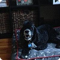 Adopt A Pet :: Bruno (Owner Surrender) - Madison, WI