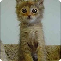 Adopt A Pet :: Muffin - Modesto, CA