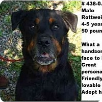Adopt A Pet :: # 438-09 - Animal Shelter - Zanesville, OH
