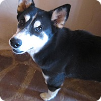 Adopt A Pet :: Rulan - Santa Fe, NM