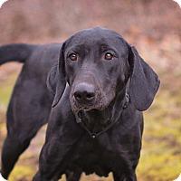 Adopt A Pet :: Sweetie Pie - Lewisville, IN