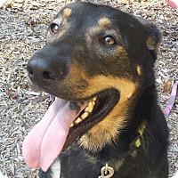 Adopt A Pet :: Parker - Allentown, PA