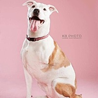 Adopt A Pet :: Lily - Chattanooga, TN