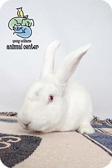 American Mix for adoption in Knoxville, Tennessee - Marshmallow Galore