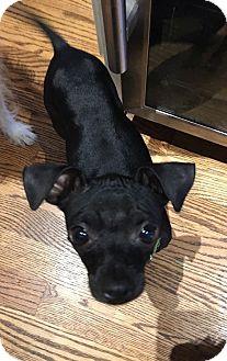 Mixed Breed (Small) Mix Dog for adoption in Houston, Texas - Tiki