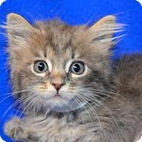 Adopt A Pet :: Cherie - Buford, GA