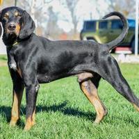 Adopt A Pet :: Zale - Ottumwa, IA