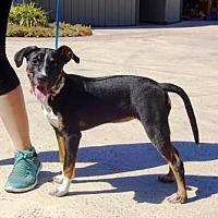 Adopt A Pet :: Malibu - Lathrop, CA