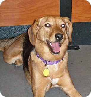 Hound (Unknown Type) Mix Dog for adoption in Rochester/Buffalo, New York - Cali