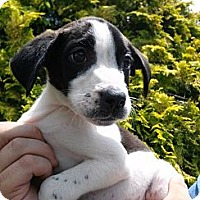 Adopt A Pet :: Lila - South Jersey, NJ