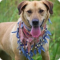 Adopt A Pet :: Suzi - Flowery Branch, GA