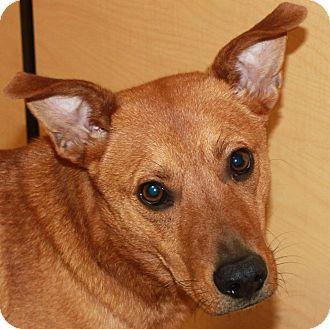 Labrador Retriever/Terrier (Unknown Type, Medium) Mix Dog for adoption in Staunton, Virginia - Almost Perfect Oscar!