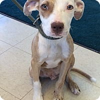 Adopt A Pet :: Sly - Natchitoches, LA