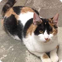 Adopt A Pet :: Maxine - Manchester, CT