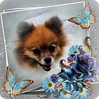 Adopt A Pet :: Gino - Crowley, LA