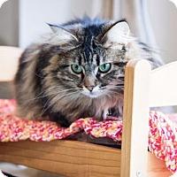 Adopt A Pet :: Moggie - Washougal, WA