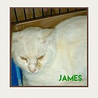 Adopt A Pet :: James - Brainardsville, NY