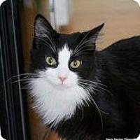 Adopt A Pet :: Jefferson - Nashville, TN