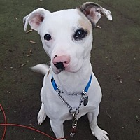 Adopt A Pet :: Wesley - Toledo, OH