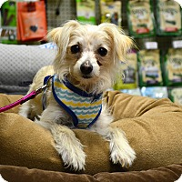 Adopt A Pet :: Einstein - Chandler, AZ