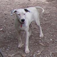 Adopt A Pet :: Milky Way - Alstead, NH