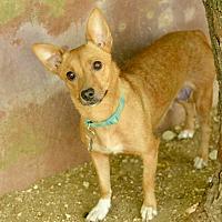 Adopt A Pet :: Juanita - San Antonio, TX