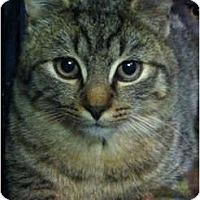 Adopt A Pet :: Spidey - Trexlertown, PA