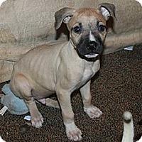 Adopt A Pet :: Jake - Westfield, IN