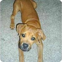 Adopt A Pet :: Logan - Thomasville, GA