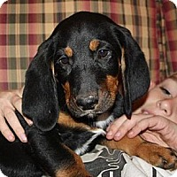 Adopt A Pet :: Zeke - in New England - kennebunkport, ME