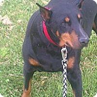 Adopt A Pet :: Sasha - Adopted!! - New Richmond, OH