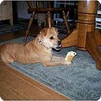 Adopt A Pet :: Fiona - Albany, NY