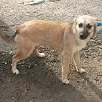 German Shepherd Dog Mix Dog for adoption in Prestonsburg, Kentucky - Lonna