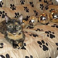 Adopt A Pet :: Mooshkie - New Egypt, NJ