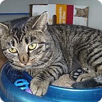 Adopt A Pet :: Melissa - Hamburg, NY
