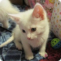 Adopt A Pet :: WALDEN - Acme, PA