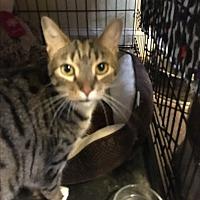 Adopt A Pet :: Riley - Lauderhill, FL
