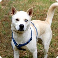 Adopt A Pet :: ZANE - Norfolk, VA