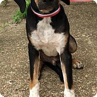 Adopt A Pet :: Tex - Allentown, PA
