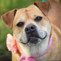 Adopt A Pet :: Malaya - Miami, FL