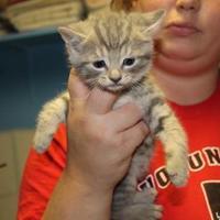 Adopt A Pet :: Herman - Robinson, IL