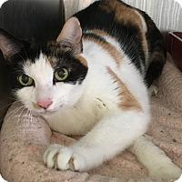 Adopt A Pet :: Arlene - Woodhaven, MI