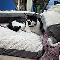 Adopt A Pet :: Berg - Rochester, MN