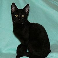 Adopt A Pet :: Kinder - Huntsville, AL