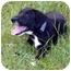 Photo 3 - Labrador Retriever/Hound (Unknown Type) Mix Puppy for adoption in Sealy, Texas - Mariah