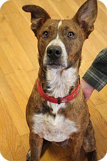 Terrier (Unknown Type, Medium) Mix Dog for adoption in Homewood, Alabama - Harley
