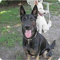 Adopt A Pet :: Greta - Green Cove Springs, FL