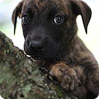 Adopt A Pet :: Lennie - South Jersey, NJ