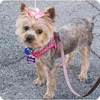 Adopt A Pet :: Ruby - Fairfax, VA